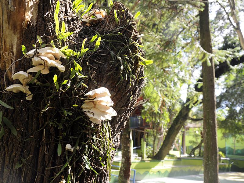 Bosque da Sabedoria