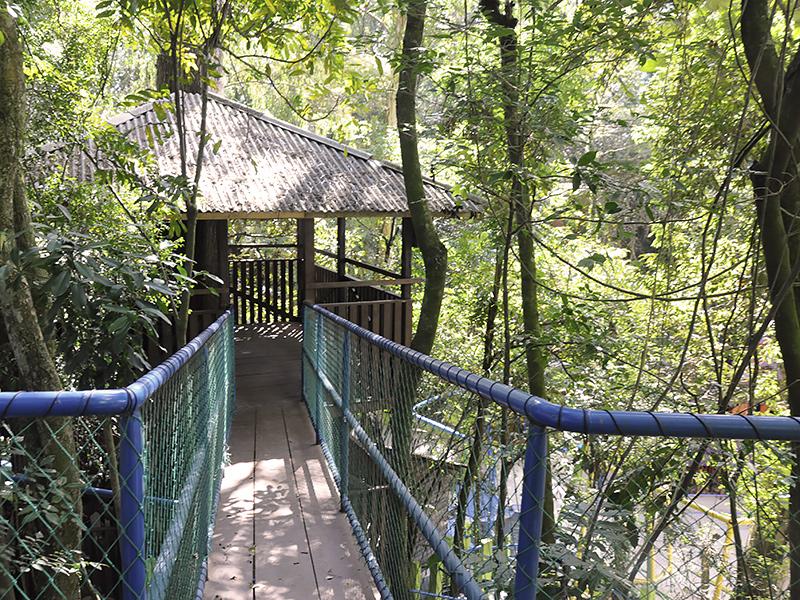 Bosque da Sabedoria – Casa na Árvore